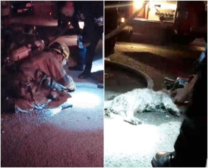 Perro siendo rescatado por bomberos; Bomberos logran rescatar perritos que estaban en una casa en llamas
