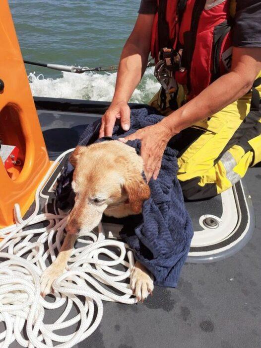 perro siendo rescatado; Bote salvavidas salva a perro de morir en el mar