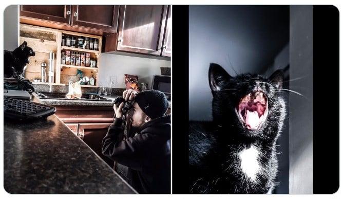 Gato maullando ;Fotógrafos comparten sus mejores trucos e internet no puede creer el resultado