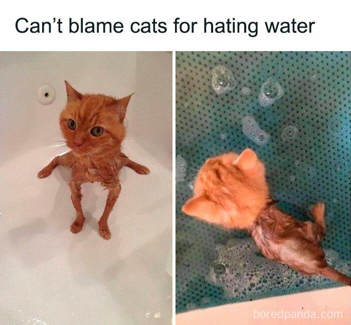 Gatos haciendo cosas extrañas
