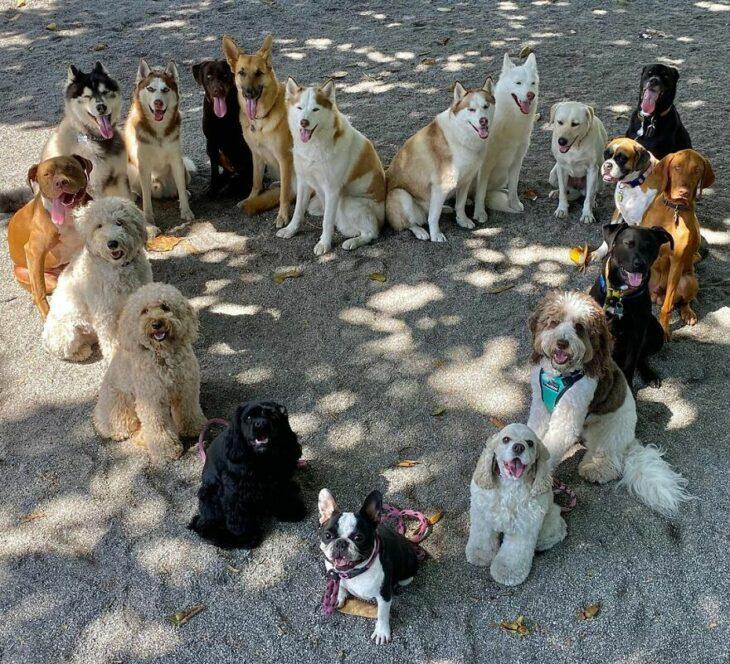 Perros formando un corazón ;Guardería de perros toma las mejores fotos de recuerdo