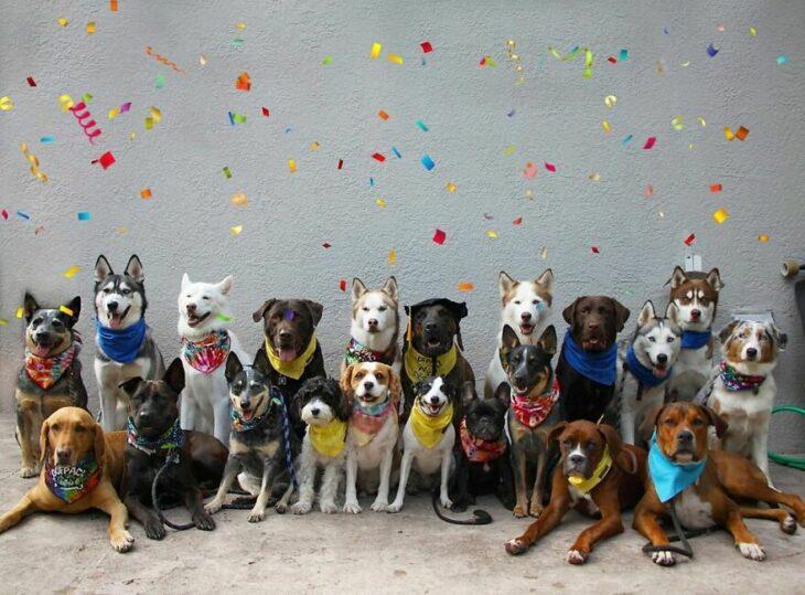 Perros con confeti ;Guardería de perros toma las mejores fotos de recuerdo