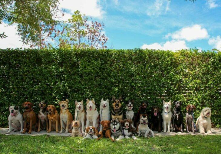 Perros en un jardín ;Guardería de perros toma las mejores fotos de recuerdo