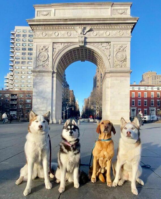 Perros frente a un monumento ;Guardería de perros toma las mejores fotos de recuerdo
