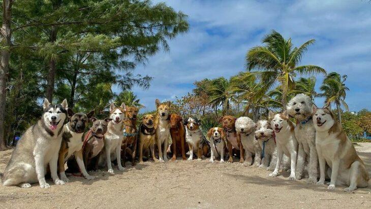 Perros en la playa ;Guardería de perros toma las mejores fotos de recuerdo