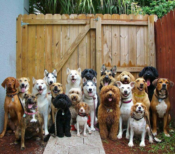 Perros frente una cerca ;Guardería de perros toma las mejores fotos de recuerdo