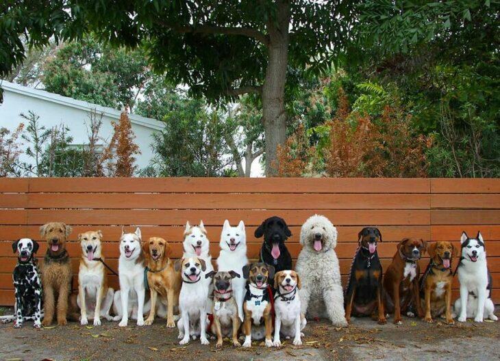 Perros en el jardín ;Guardería de perros toma las mejores fotos de recuerdo
