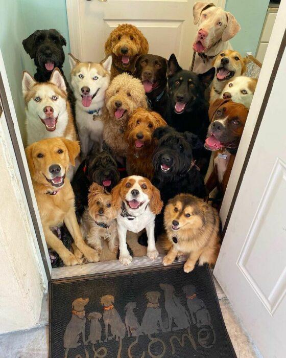 Perros frente a una puerta ;Guardería de perros toma las mejores fotos de recuerdo