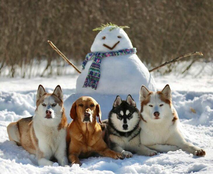 Perros en la nieve ;Guardería de perros toma las mejores fotos de recuerdo