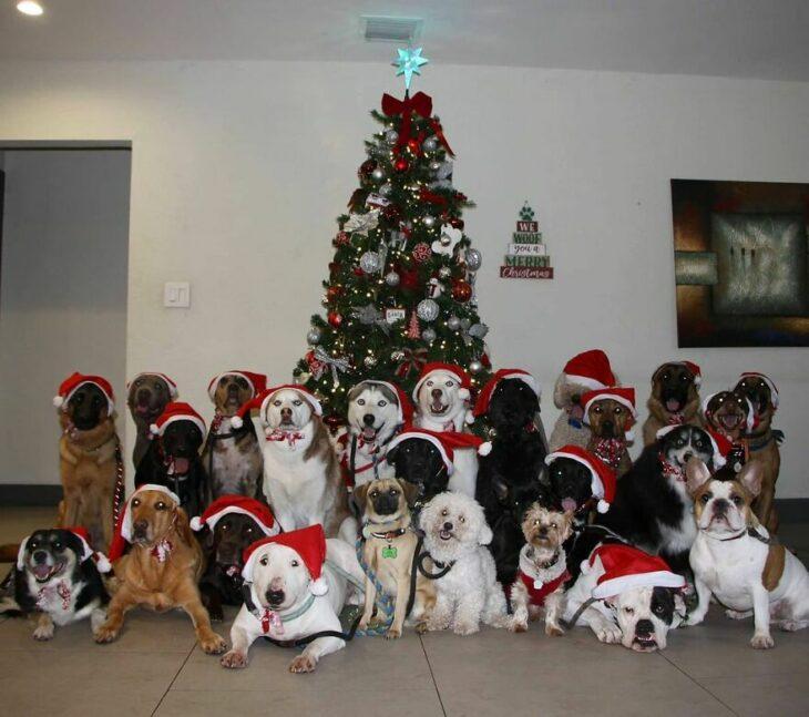 Perros frente a un árbol de Navidad ;Guardería de perros toma las mejores fotos de recuerdo