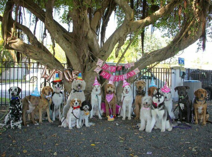 Perros en una fiesta ;Guardería de perros toma las mejores fotos de recuerdo