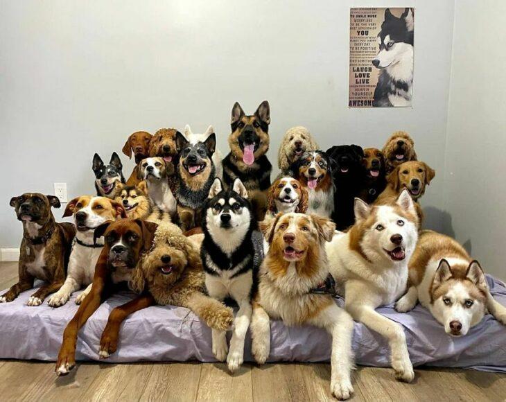 Perros sobre una cama ;Guardería de perros toma las mejores fotos de recuerdo