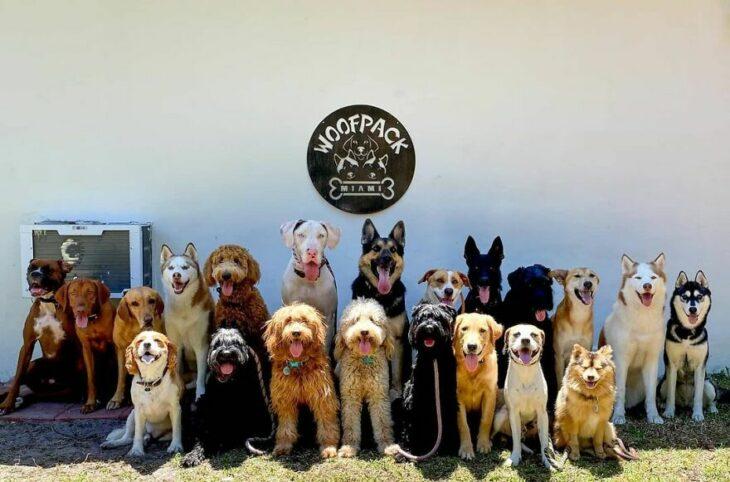 Perros en un patio trasero ;Guardería de perros toma las mejores fotos de recuerdo