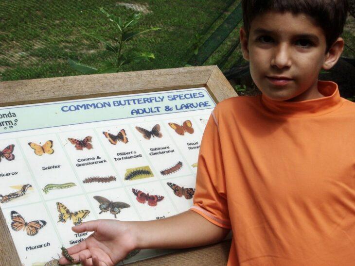 Duncan niño junto a tablero de mariposas ;Joven siembra miles de flores durante 12 años y logra salvar a cientos de mariposas en extinción