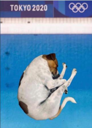 Memes de perritos entrando a una piscina