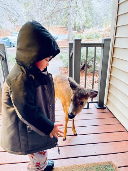 Niño jugando con un ciervo bebé