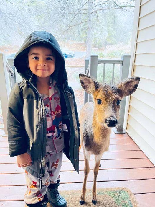 Niño posando junto a un ciervo bebé