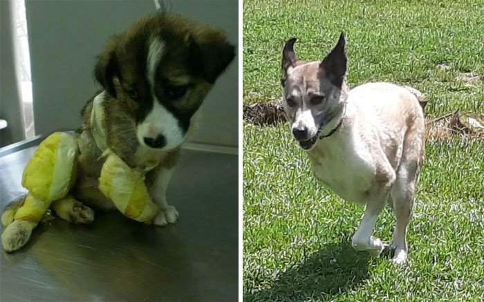 Perrito antes y después de ser adoptado de un refugio