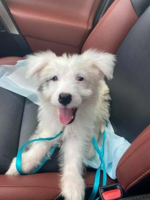 Mascotas que fueron adoptadas y viven felices