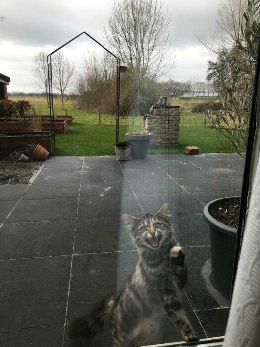 Gato en el patio trasero ;Personas comparten fotos de gatos maullando