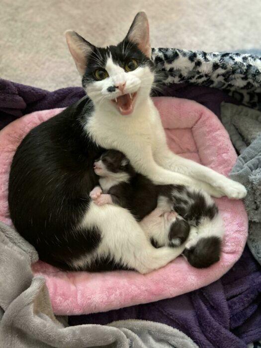 Gato sobre un sofá rosa ;Personas comparten fotos de gatos maullando