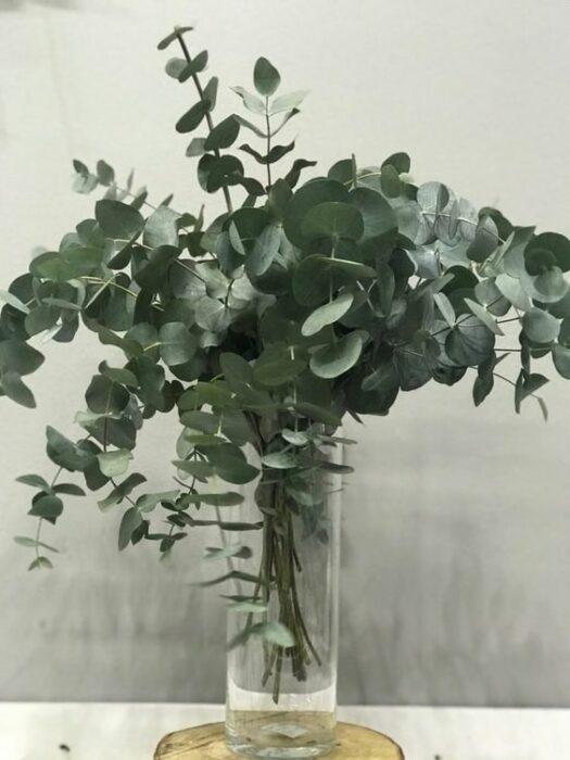 Planta que ayuda a atraer la abundancia
