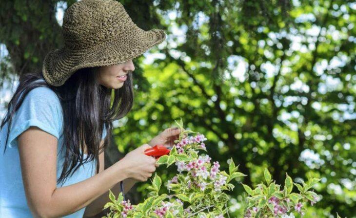 Chica cortando plantas de un jardín