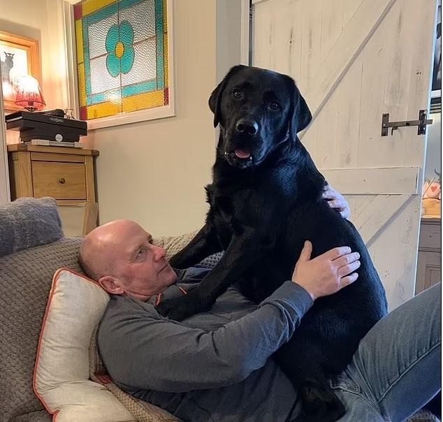 Perrito labrador jugando con su dueño mientras están recostados en un sofá