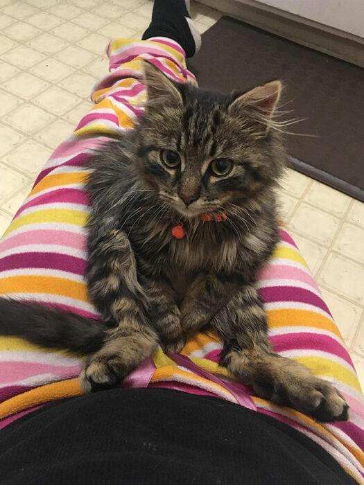 Gatito sentado ;20 Mascotas que se mostraron amorosamente agradecidos con sus veterinarios