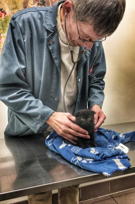 Gato miniatura siendo revisado ;20 Mascotas que se mostraron amorosamente agradecidos con sus veterinarios