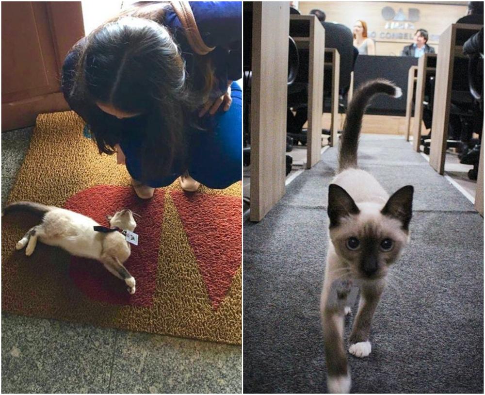 Bufete de abogados contrata a gatito callejero y lo nombran miembro oficial el equipo