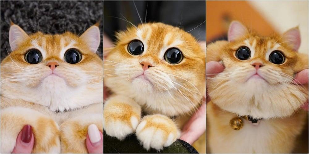 Este gatito es igual al de Shrek y nos encanta