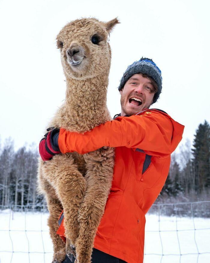 Llama ;Allan Dixon; hombre se hace amigo de cualquier animal que encuentra en su camino