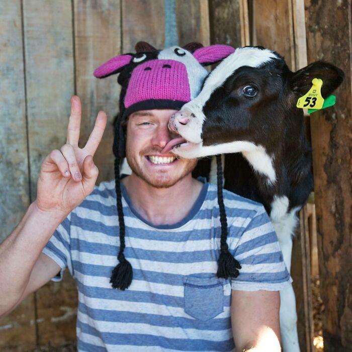Vaquita bebé ;Allan Dixon; hombre se hace amigo de cualquier animal que encuentra en su camino