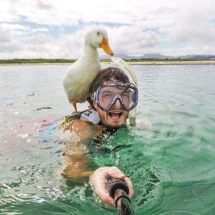Pato ;Allan Dixon; hombre se hace amigo de cualquier animal que encuentra en su camino