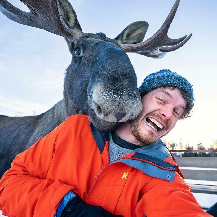 Alce ;Allan Dixon; hombre se hace amigo de cualquier animal que encuentra en su camino