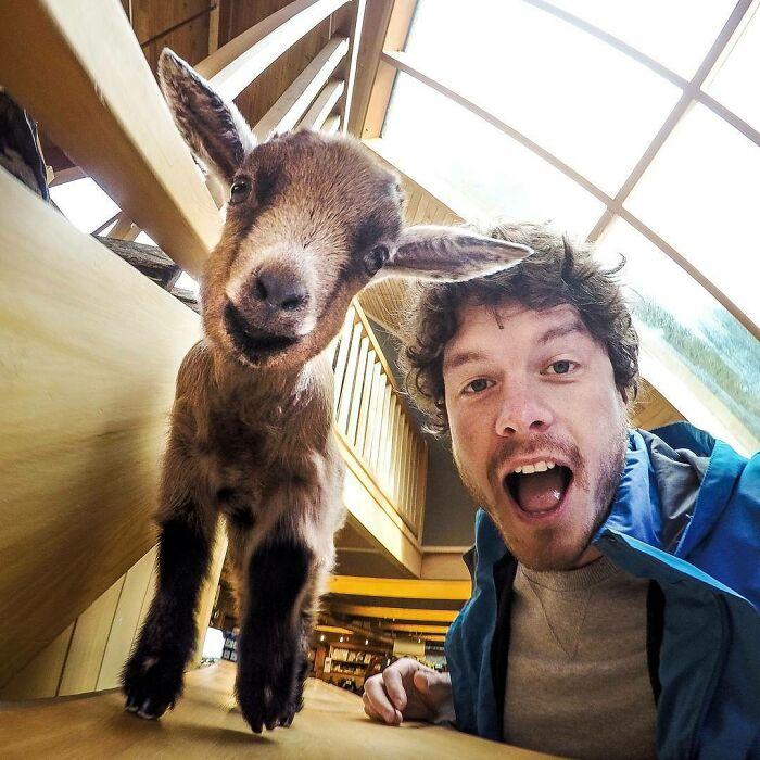 Cabrita bebé ;Allan Dixon; hombre se hace amigo de cualquier animal que encuentra en su camino