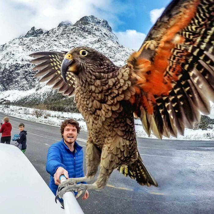 Águila ;Allan Dixon; hombre se hace amigo de cualquier animal que encuentra en su camino
