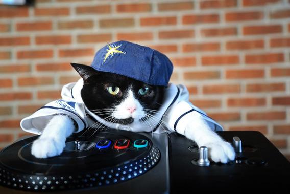Gato girando una mesa de dj