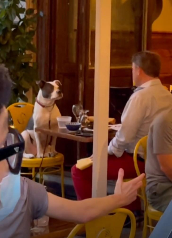 Hombre visita restaurante con su perro y ambos disfrutan de una cena de lujo