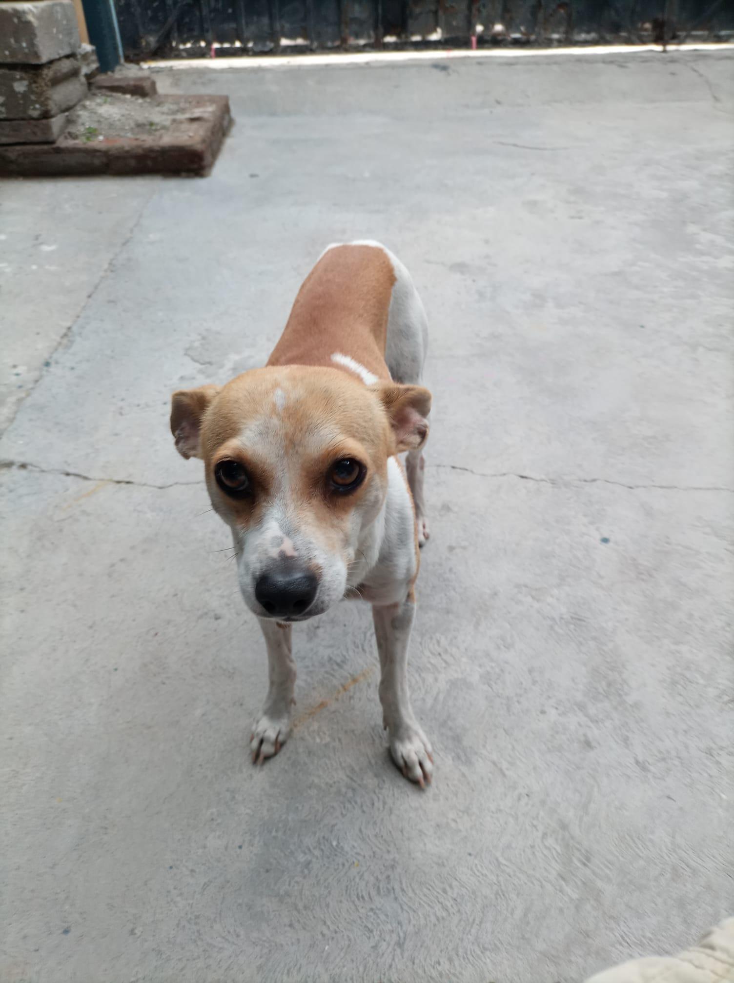 Perro en casa; Niña que buscaba a su perrito con un dibujo hecho a mano logra encontrarlo