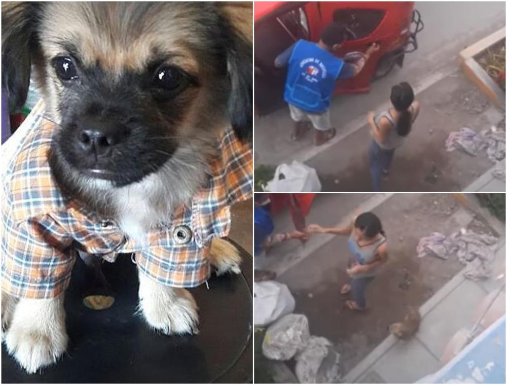 Perro fue olvidado en un mercado y volvió a casa en mototaxi
