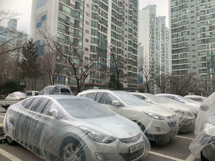 carros cubiertos; Corea es de otro mundo y estas fotos lo prueban