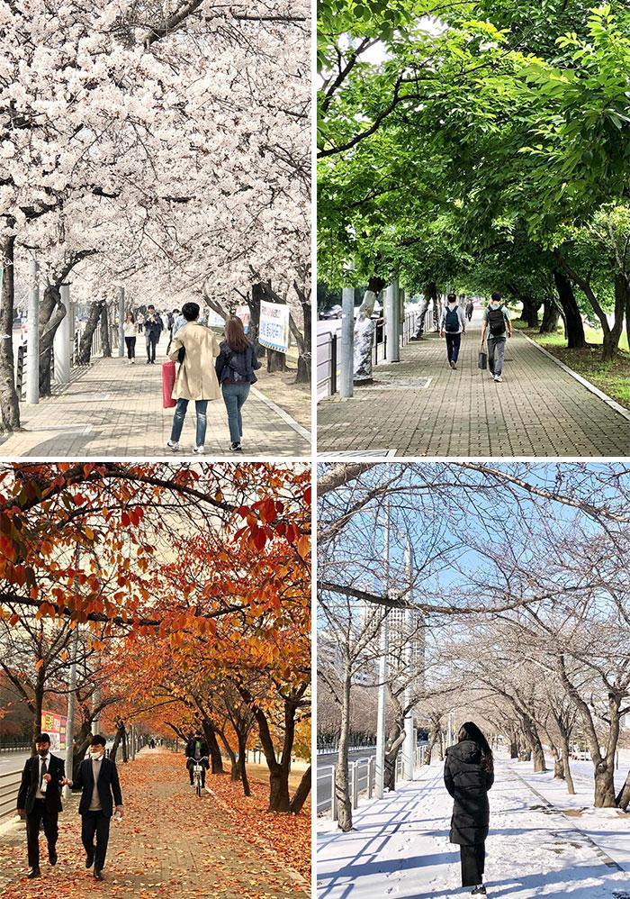 Paseos públicos; Corea es de otro mundo y estas fotos lo prueban