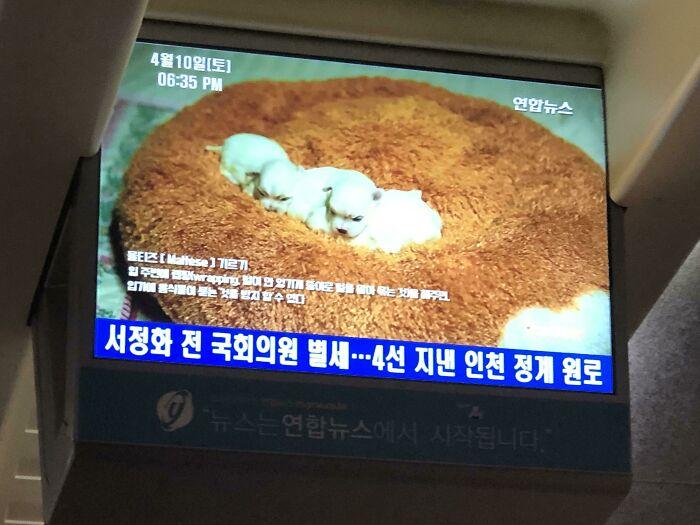 anuncio en pantalla; Corea es de otro mundo y estas fotos lo prueban