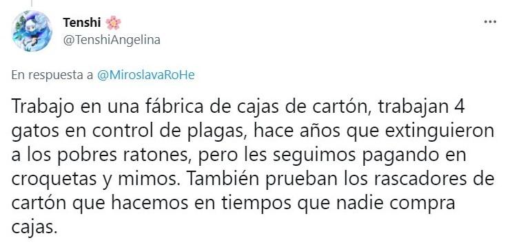 Tuit sobre Empresa mexicana 'contrata' gatito como lo vigilante; ¡hasta le dieron su gafete!