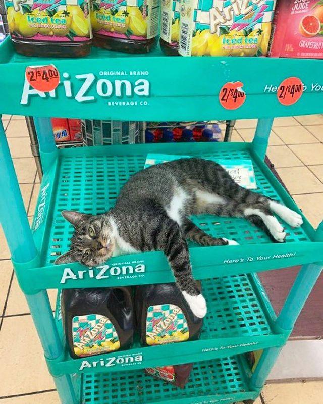 gato sobre una repisa ;17 Pruebas de que los gatos siempre hacen lo que quieren