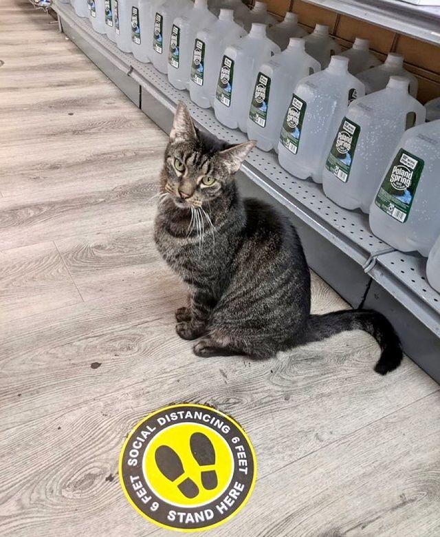 gato en un supermercado ;17 Pruebas de que los gatos siempre hacen lo que quieren