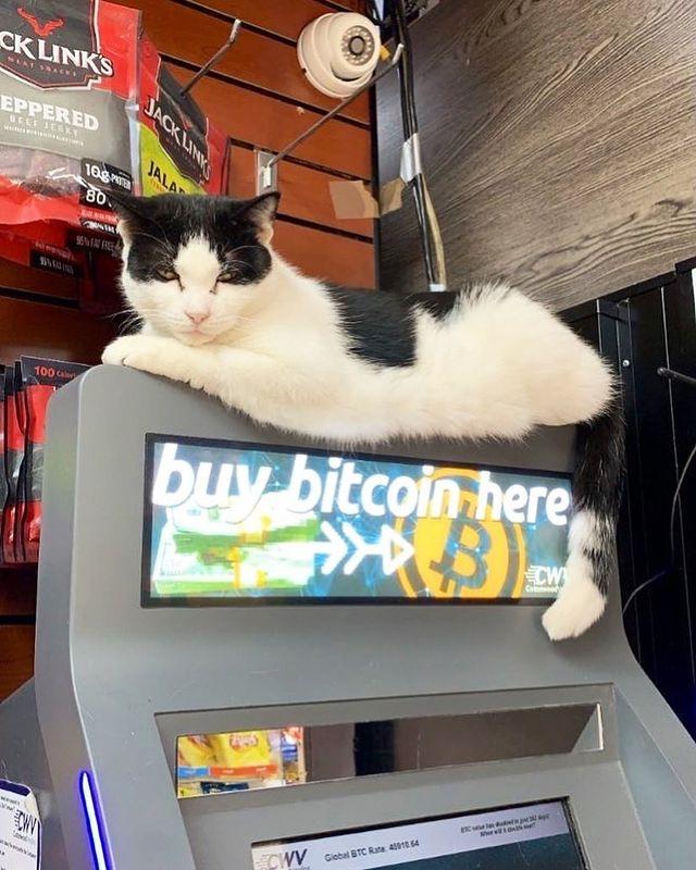 Gato sobre cajero automático ;17 Pruebas de que los gatos siempre hacen lo que quieren