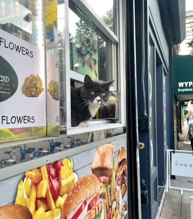 gato en una ventanilla ;17 Pruebas de que los gatos siempre hacen lo que quieren